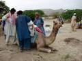 Camel being loaded