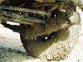 Muddy kamani