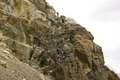 Climb on the way to Jhoola