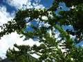 Tree near Paiju