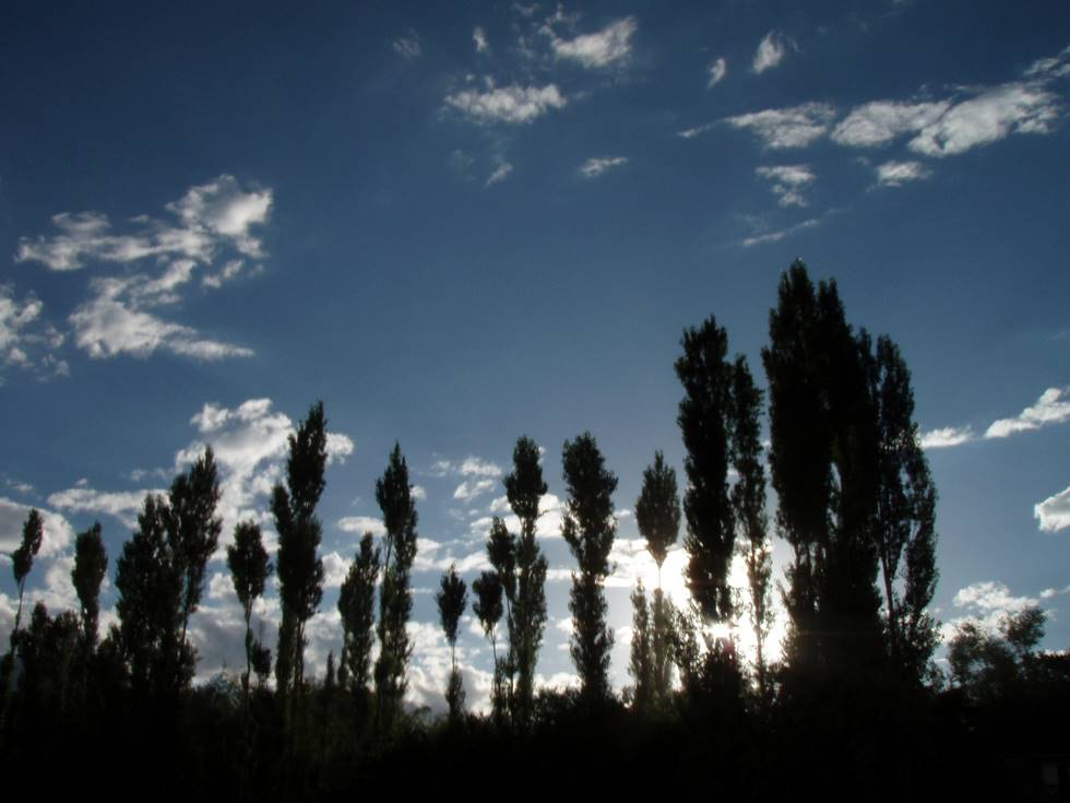 Trees near Skardu