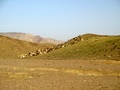Goats graze on a hill in Sorh Valley, Baluchistan