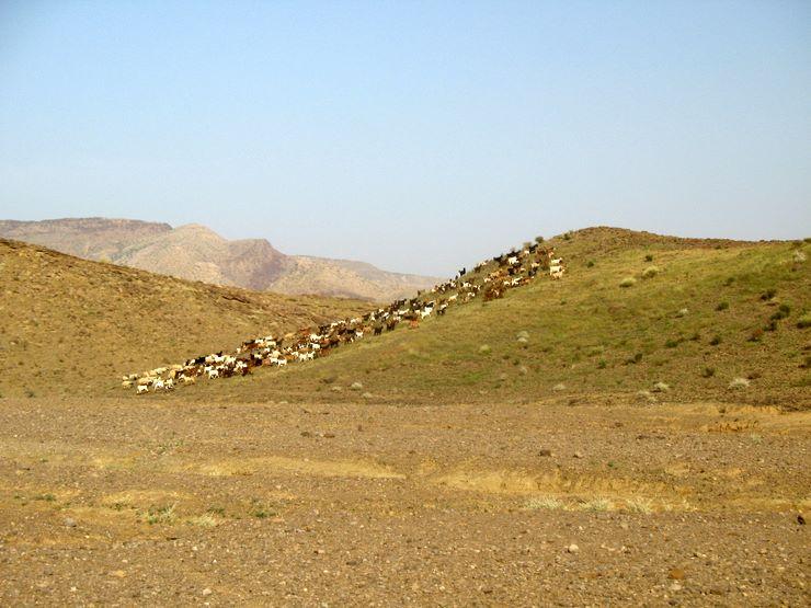 Goats graze on a hill in Sorh Valley, Baluchistan