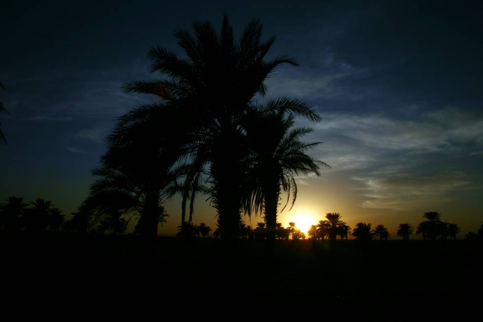 Sunset behind a date palm in Mashkell