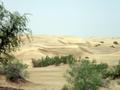 Thar Desert 4